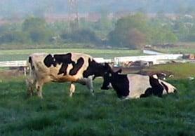New Jersey Dairy Farm